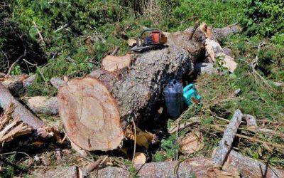 Join in the Challenge – Stop cutting trees