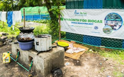 "Water Hyacinth ""Menace"" to clean energy (biogas) and rich organic fertilizer."